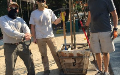 Bringing 'ReLeaf' With Tree Planting